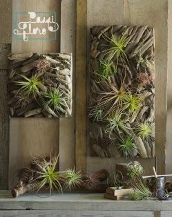pASSIFLORE décoration-murale-panneau-plantes-aériennes-bois-flotté