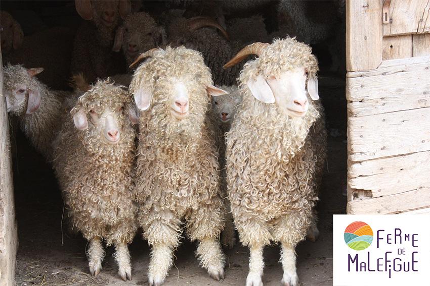 chèvres mohair logo
